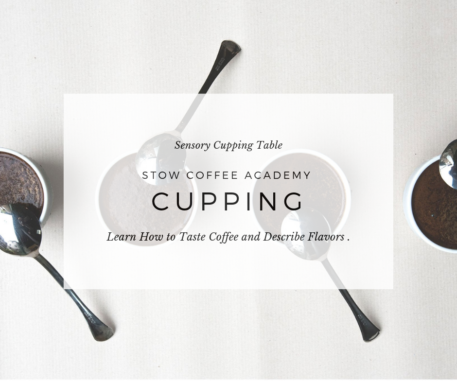 SENSORY CUPPING TABLE
